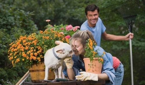 Cibo e accessori per cani gatti e animali domestici