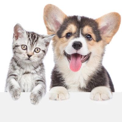prodotti per animali, cani e gatti