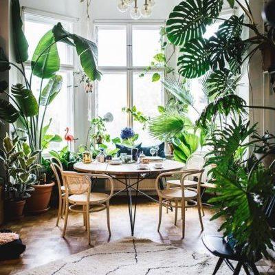 piante da appartamento vendita online